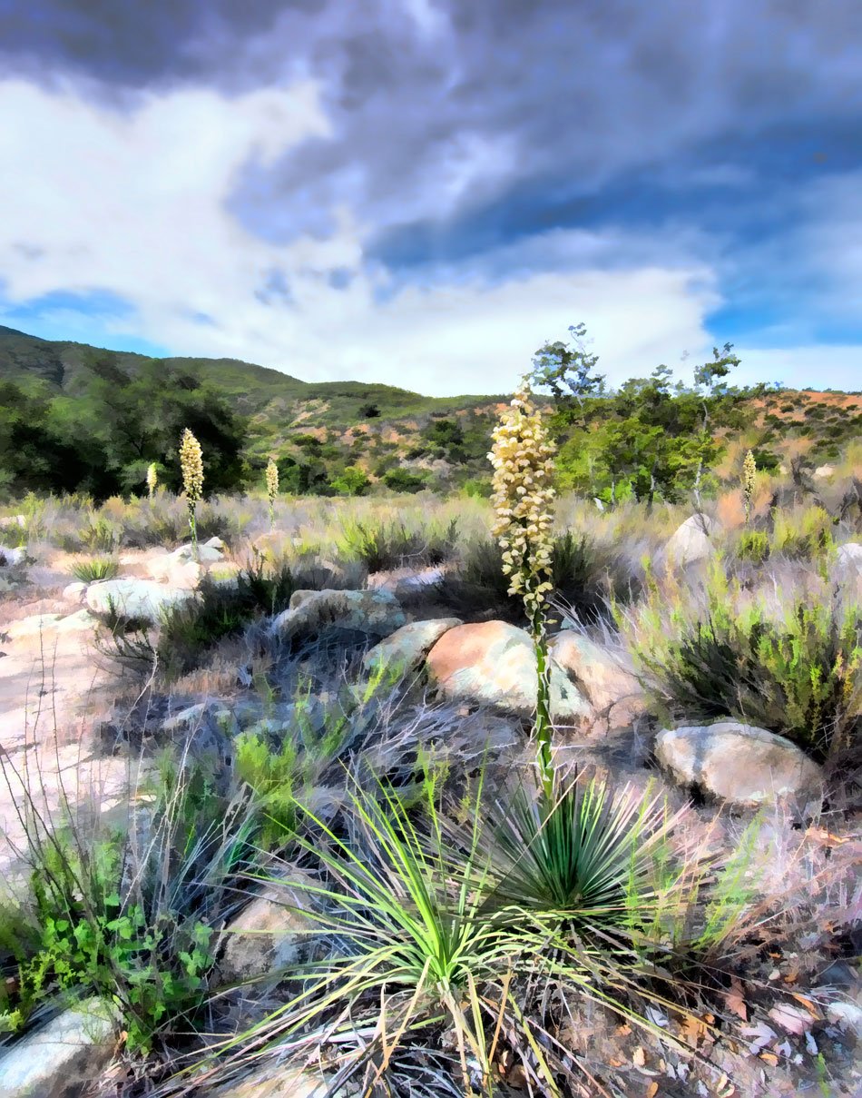 ds12-dripping-springs-yucca-v