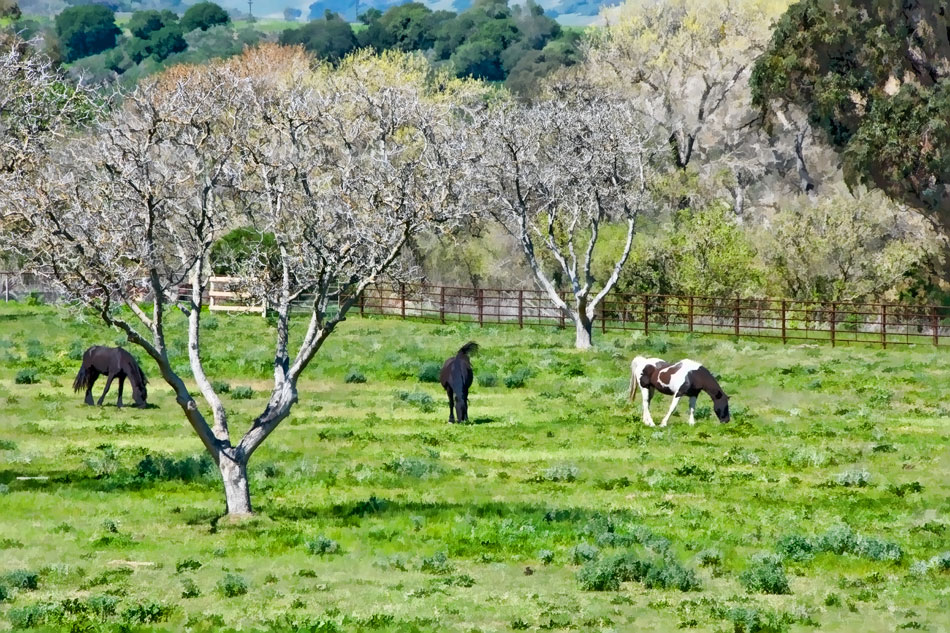 12-gv-garner-valley-horses-grazing