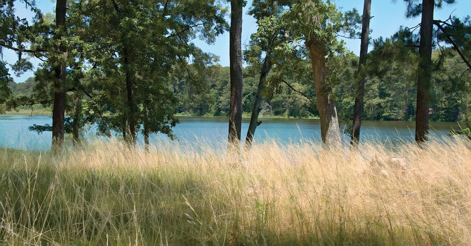 la12-valentine-lake-grass-wide