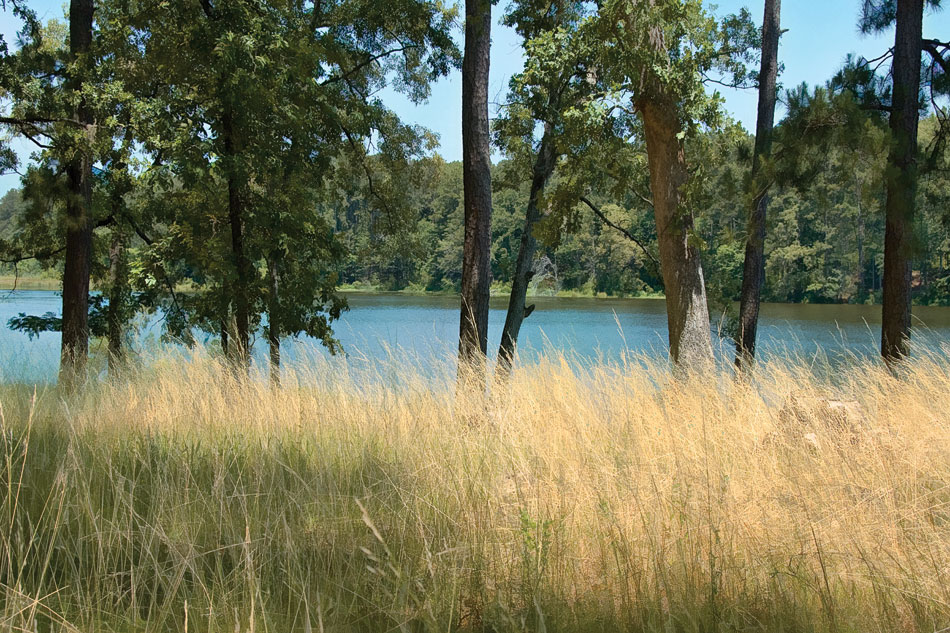la13-valentine-lake-grass
