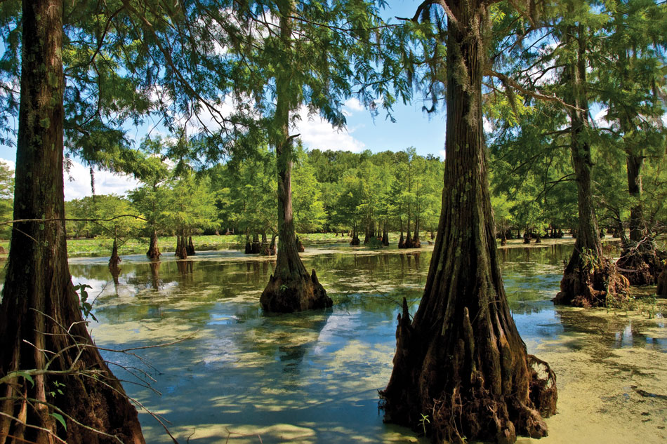 la2-lake-cypress-trees