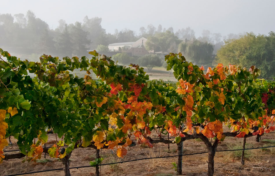 tew3-winery-morning-haze