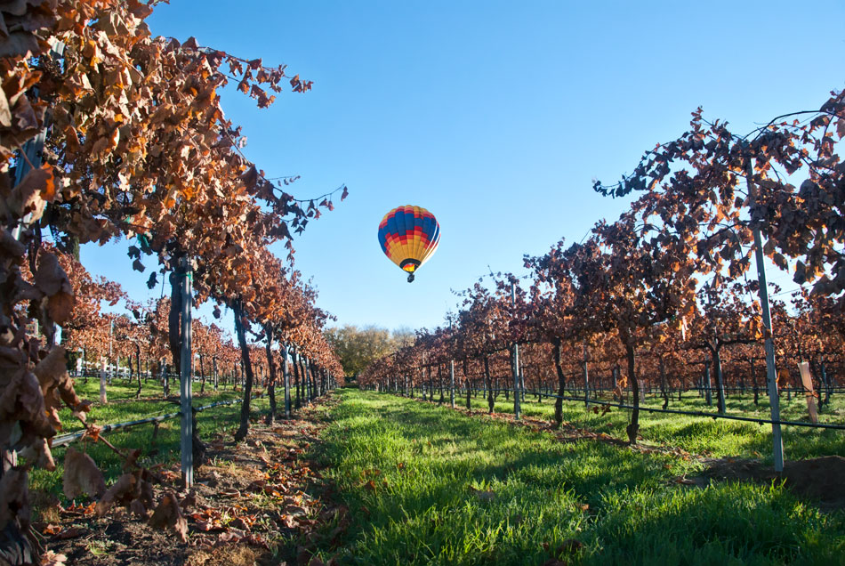 tew4-vineyard-fall-balloon-corr