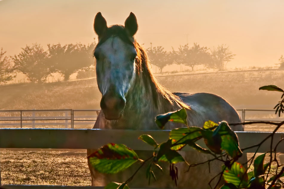 tn15-tenaja-horse-at-sunrise